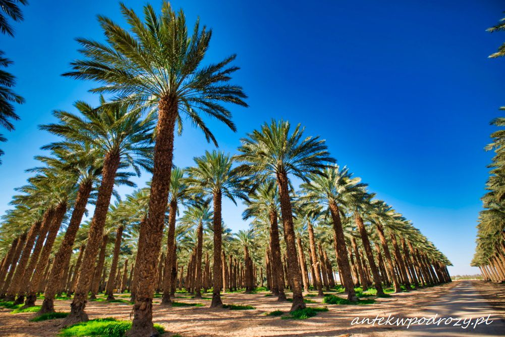 Eilat, Ejlat, Izrael